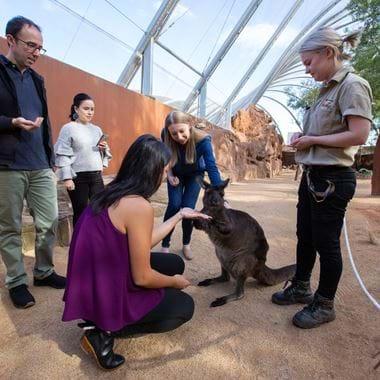 People feeding a Kangaroo